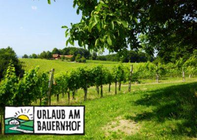 Urlaub am Winzerhof in Österreich